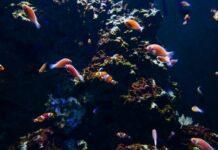 Jak wybrać akwarium dla rybek